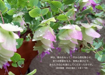Act._14-17_天から雨を降らせ.jpg